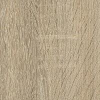Cambrian Oak